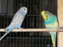 femelle agressive et le pecking order Img_0413