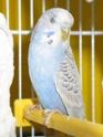 femelle agressive et le pecking order Img_0414