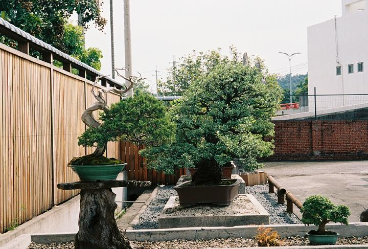 Other Bonsai from Mr. Cheng Cheng Kung Junipe10