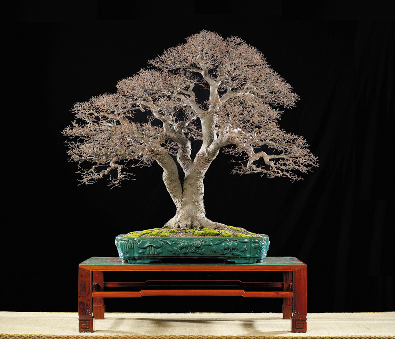 Tenth Asia Pacific Bonsai and Suiseki Exhibition Mao_pu10