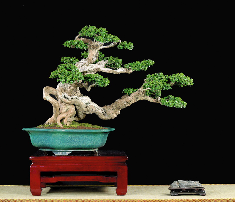 Tenth Asia Pacific Bonsai and Suiseki Exhibition Mr_yan10