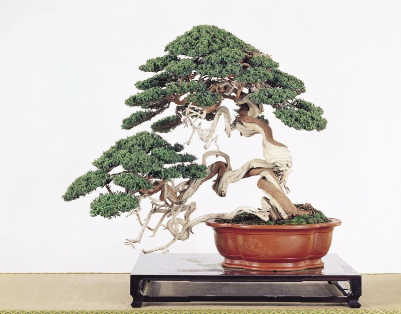 Tenth Asia Pacific Bonsai and Suiseki Exhibition - Page 2 P1110
