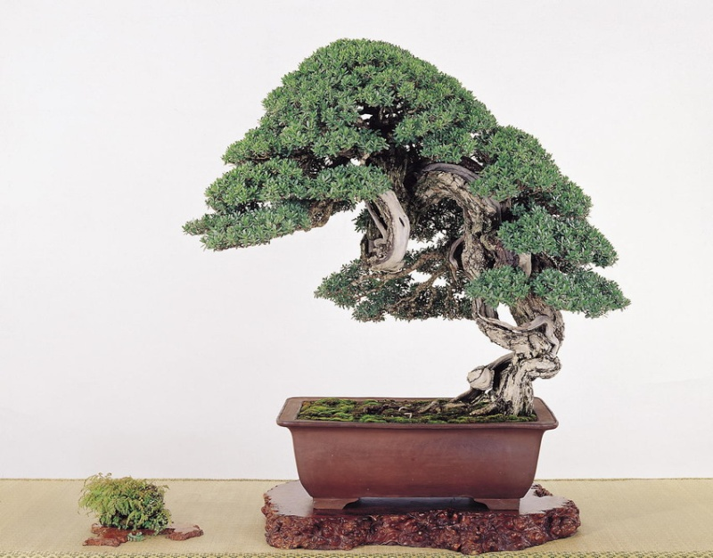 Tenth Asia Pacific Bonsai and Suiseki Exhibition - Page 2 P1410