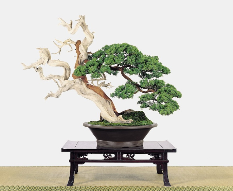 Tenth Asia Pacific Bonsai and Suiseki Exhibition - Page 2 P3910