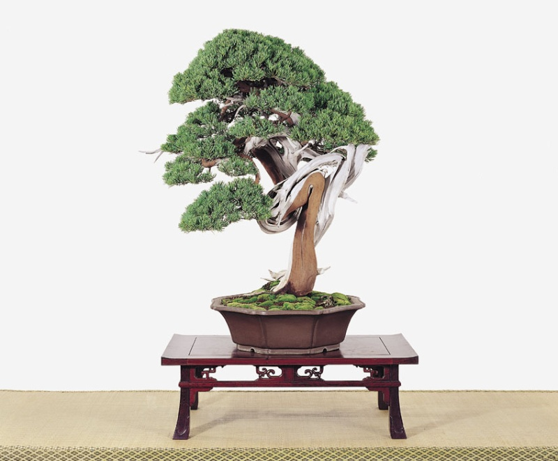 Tenth Asia Pacific Bonsai and Suiseki Exhibition - Page 2 P4810