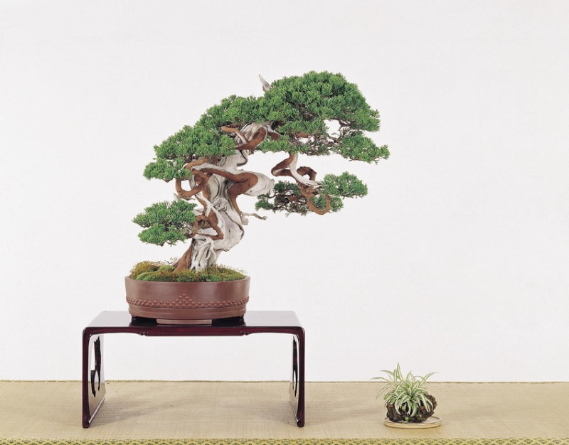 Tenth Asia Pacific Bonsai and Suiseki Exhibition P6610