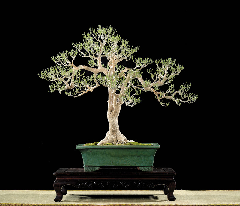 Tenth Asia Pacific Bonsai and Suiseki Exhibition - Page 2 P8010