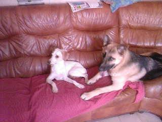 Princesse , Echo et Lou ! 08210