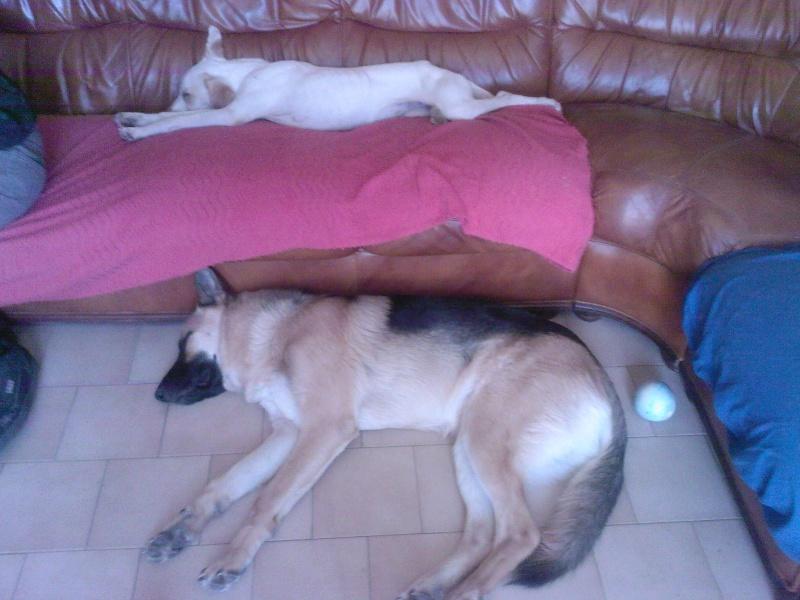 Princesse , Echo et Lou ! Sp_a0024