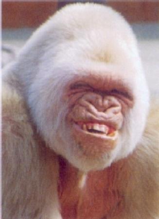 JUDAS  et...............rien que du JUDAS !!!!!! Gorill10