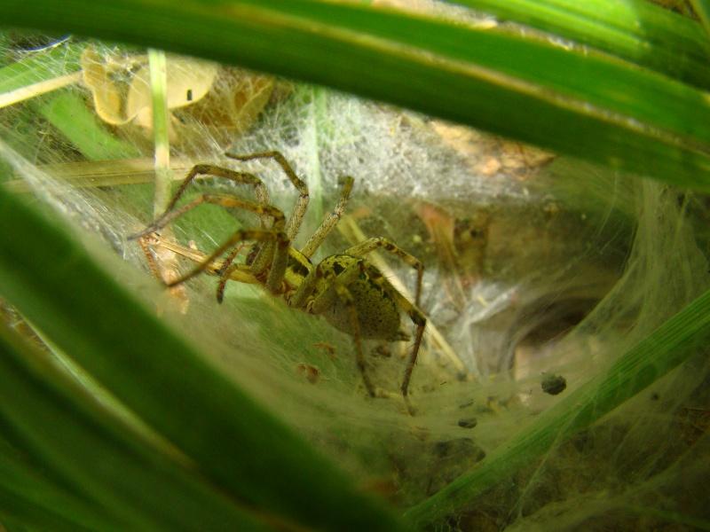 [à identifier] arachnide Photo_73