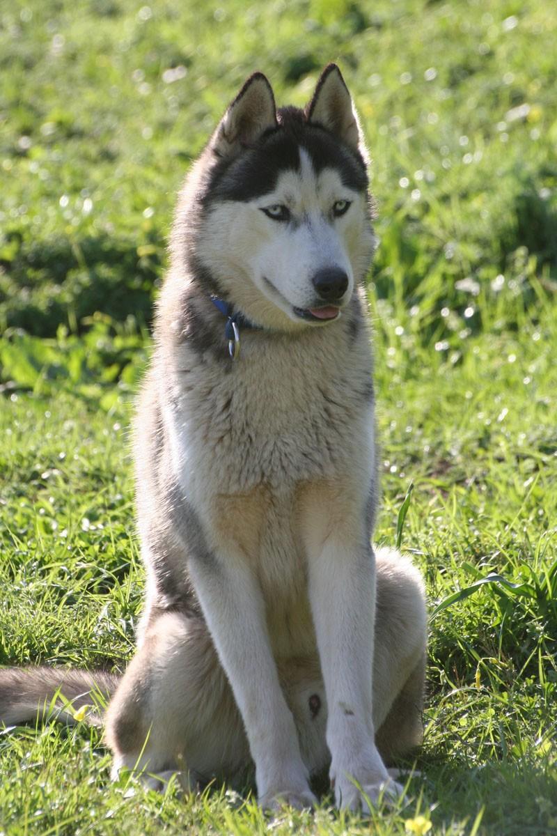 """Concours de la photo de chiens la plus """"belle"""" - Page 2 Img_4117"""