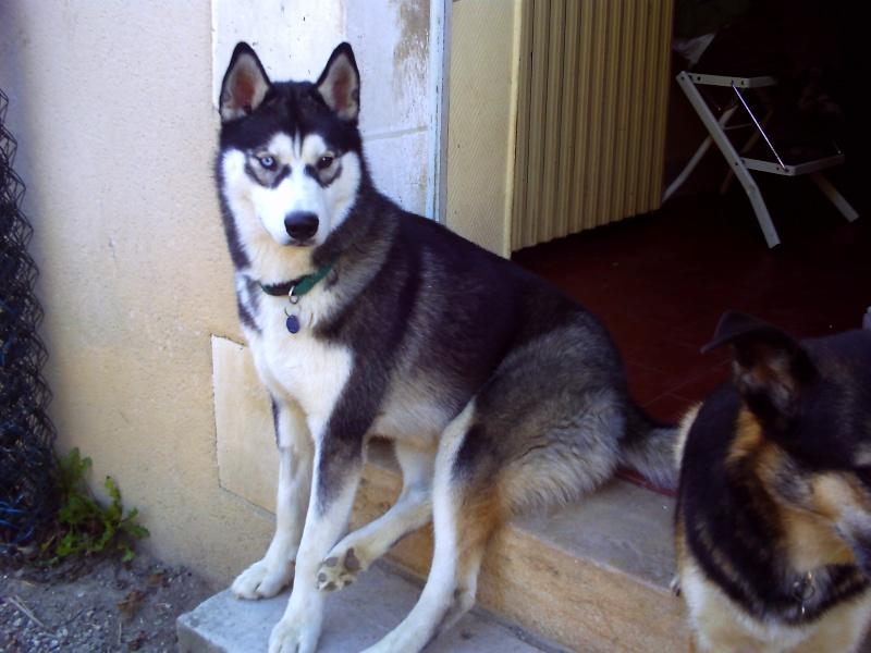 Nos loups grandissent, postez nous vos photos Pict0115