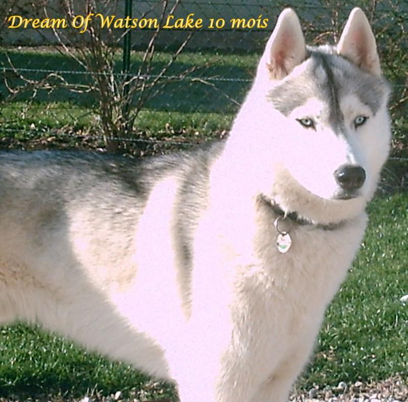 Nos loups grandissent, postez nous vos photos - Page 2 10_moi10