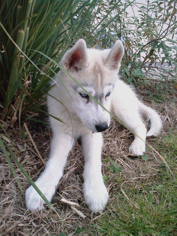 Nos loups grandissent, postez nous vos photos - Page 2 3_mois10