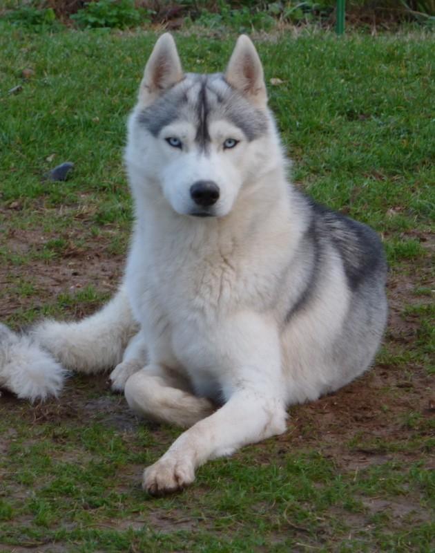 Nos loups grandissent, postez nous vos photos - Page 2 P1010510