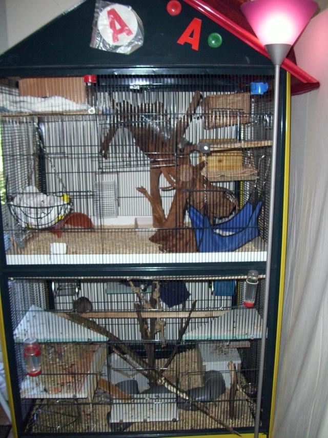 mes cages... et la pièce de vie  100_2210