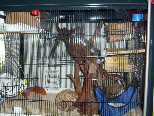 mes cages... et la pièce de vie  100_2310