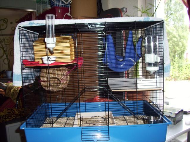mes cages... et la pièce de vie  100_2314