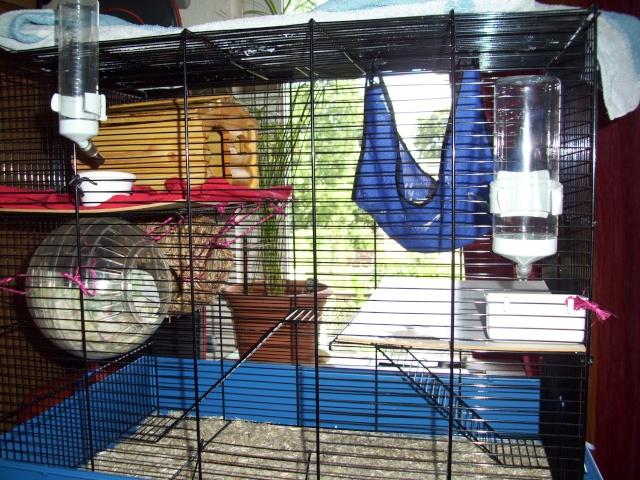mes cages... et la pièce de vie  - Page 2 100_2318