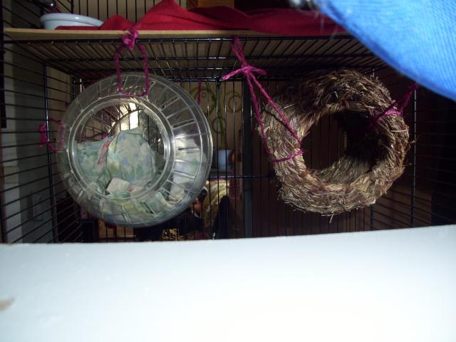 mes cages... et la pièce de vie  - Page 2 100_2319
