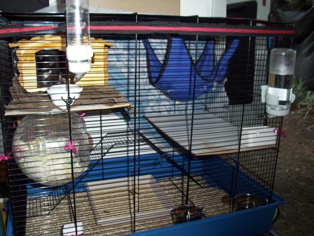 mes cages... et la pièce de vie  - Page 2 100_2411