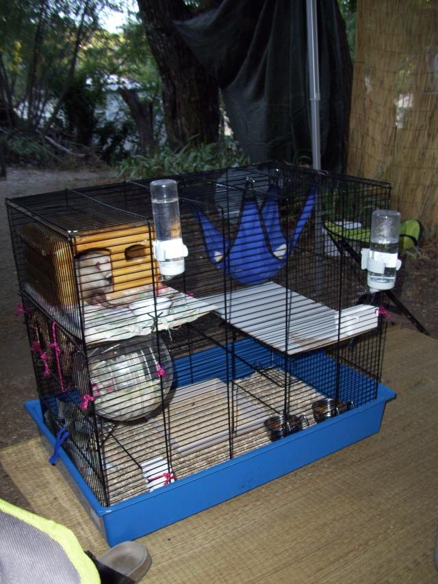 mes cages... et la pièce de vie  - Page 2 100_2513