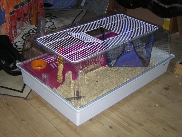 mes cages... et la pièce de vie  Dscn1310