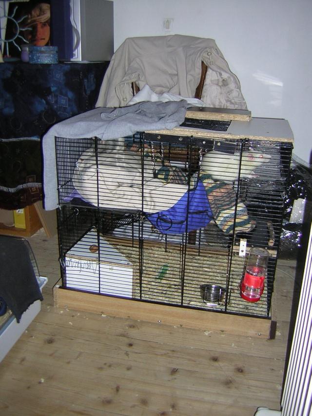 mes cages... et la pièce de vie  Dscn1312