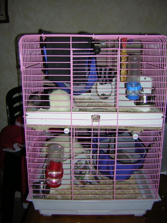 mes cages... et la pièce de vie  Dscn1410