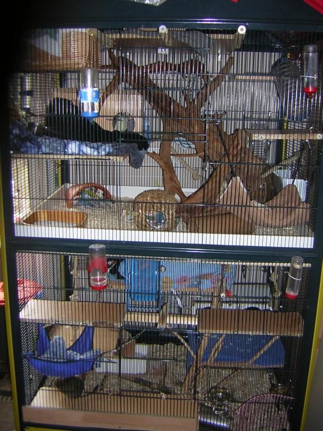 mes cages... et la pièce de vie  Dscn3910