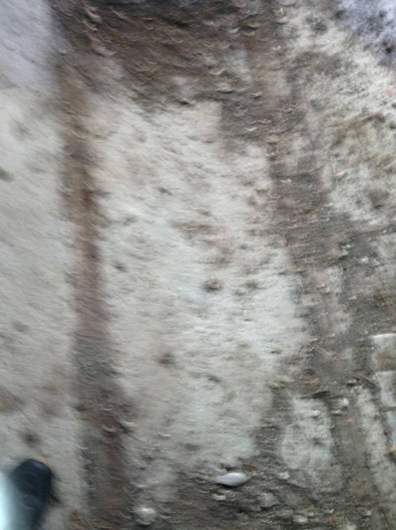 urbex , exploration d'un tunnel de munitions de la 1 guerre mondial .region paca en photo. 00710