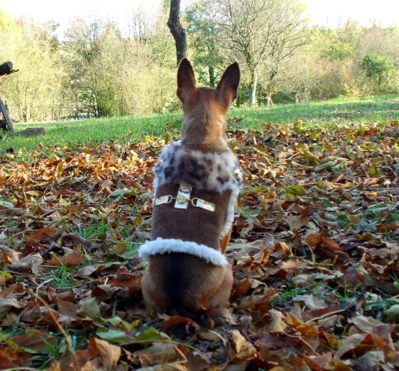 Vos chiens et leurs harnais! Photo  - Page 3 Vladou10