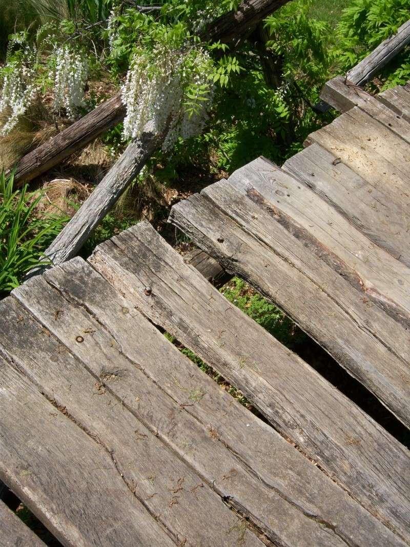 Le petit pont de bois 100_0117