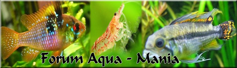 Forum Aqua-Mania
