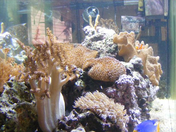 population / taille de l'aquarium Dscf1712