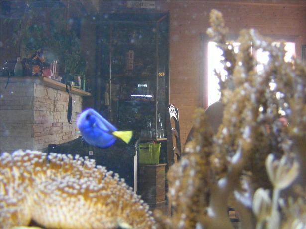 population / taille de l'aquarium Dscf1713