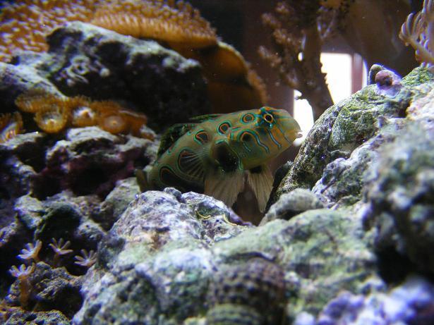 population / taille de l'aquarium Dscf1717