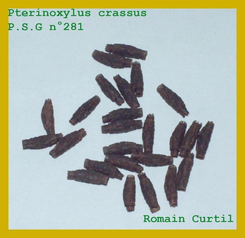Pterinoxylus crassus Pterin10