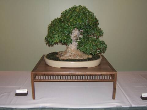 Midwest Bonsai Show