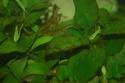 Pb algues Dsc_0112