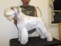 """GOOD AS GOLD  OF ROXY'S PRIDE """"CHRISTAL"""" Hpim2615"""
