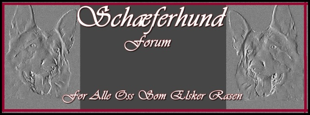 German Shepherd Forum