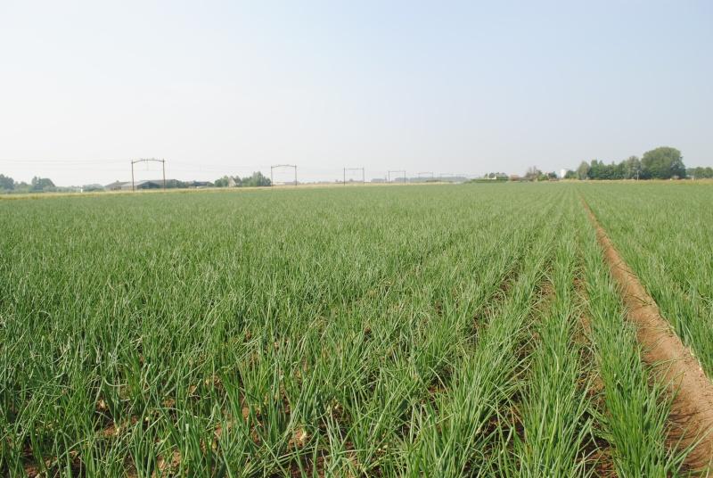 provoc et pari sur les marges du blé.... - Page 5 Bio_en10
