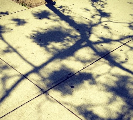 Assignment 15: Casting Shadows Due May 16 Photo10