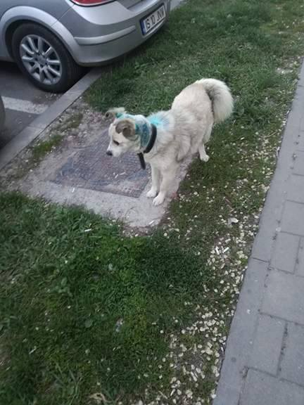 BABAS/MALE/9 ANS /TAILLE MOYENNE  Babs610