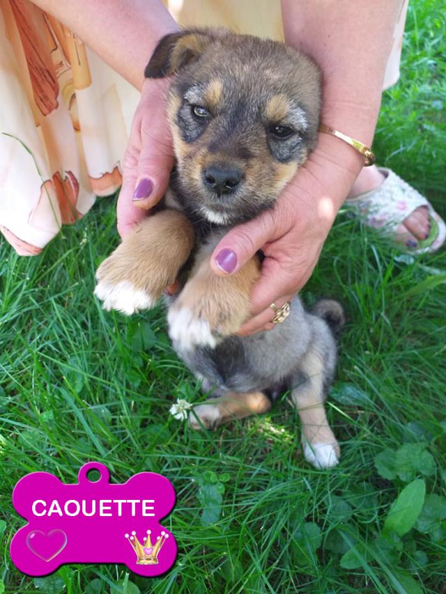 CAOUETTE/FEMELLE/3 MOIS /TAILLE PETITE ADULTE CHEZ LES PARENTS DU VETERINAIRE Caouet11