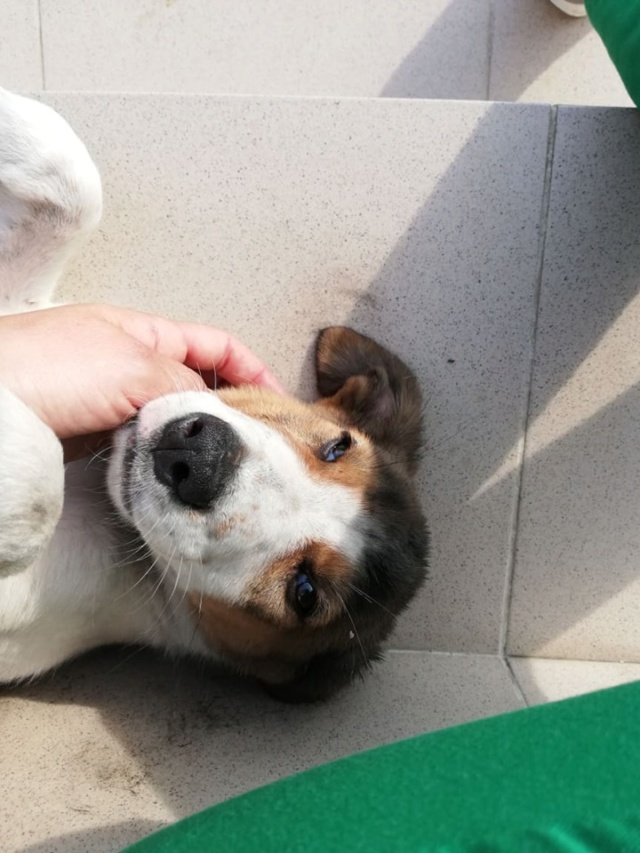 COOPER/MALE/5 MOIS /TAILLE MOYENNE A GRANDE ADULTE  Cooper15