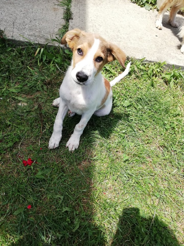 COOPER/MALE/5 MOIS /TAILLE MOYENNE A GRANDE ADULTE  Cooper17