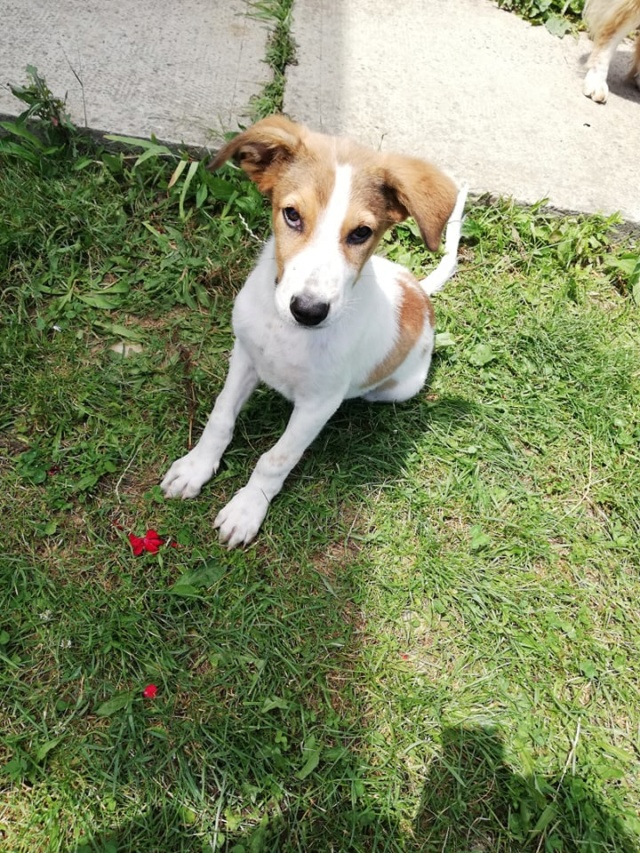 COOPER/MALE/5 MOIS /TAILLE MOYENNE A GRANDE ADULTE  Cooper18